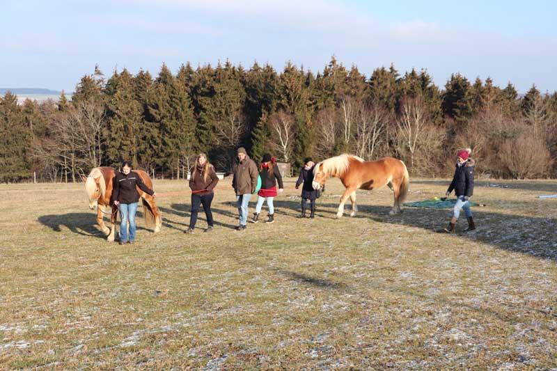 Pferdecoaching in Wittlich (Kleinich)